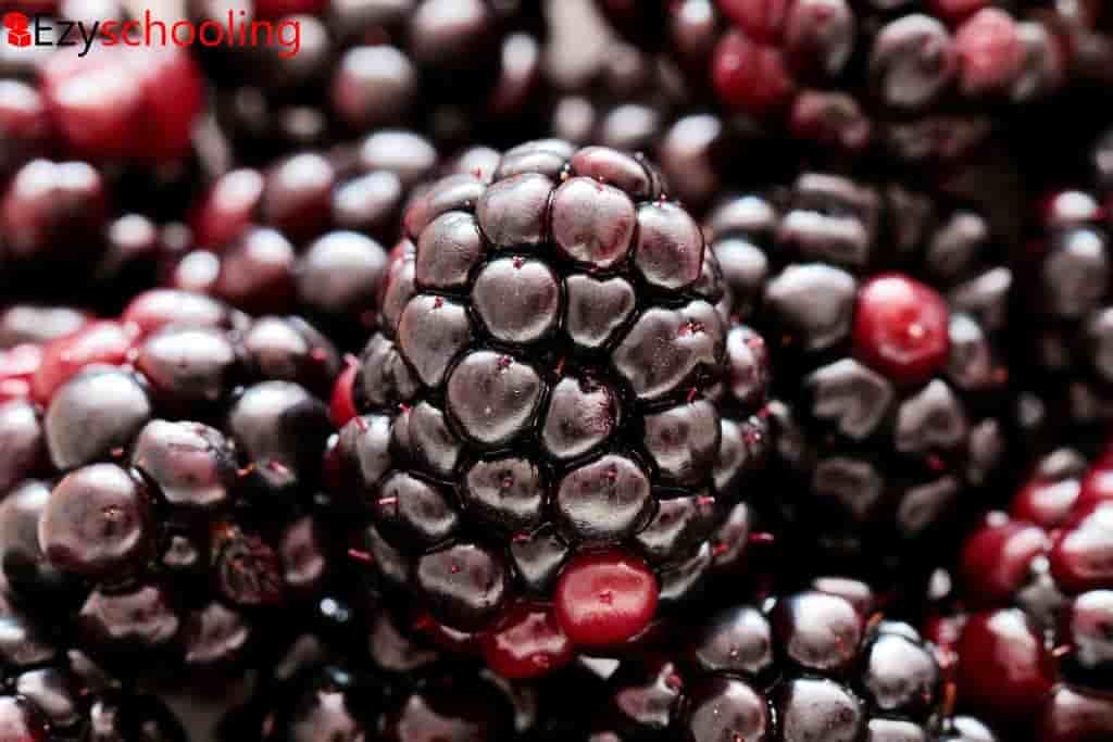 Black Raspberries might Prevent Cancer