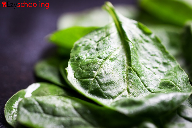 Spinach Improves Eye Sight