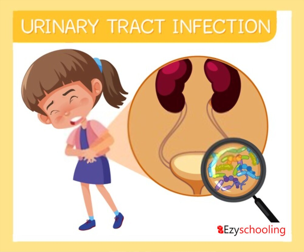 Urinary Tract Infection in Kids